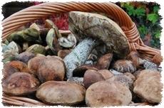 Agroturystyka na jesień