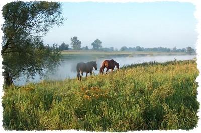 Konie agroturystyka nad Wartą