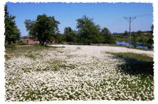 Agroturystyka wiosną