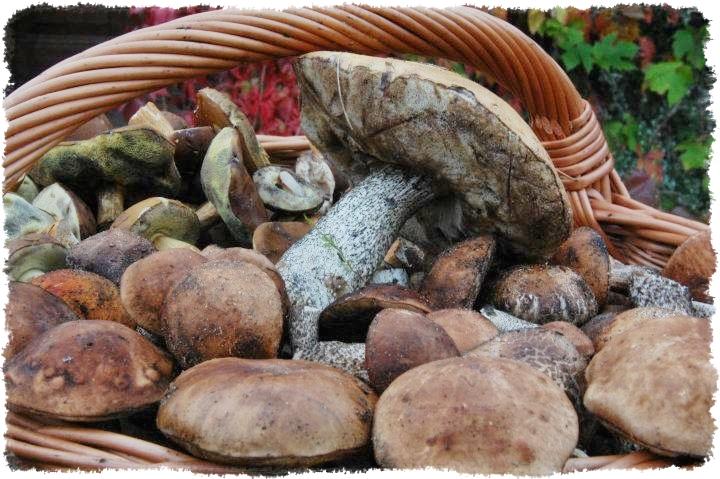Agroturystyka Puszcza Notecka - noclegi nad Wartą