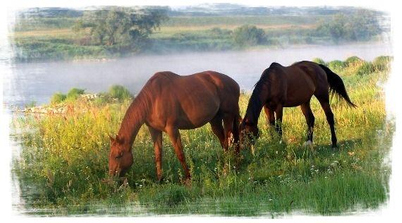 Agroturystyka lubuskie z końmi