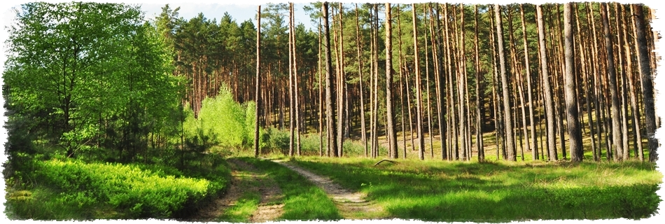 agroturystyka pośród lasu