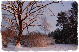 agroturystyka zima drzewa